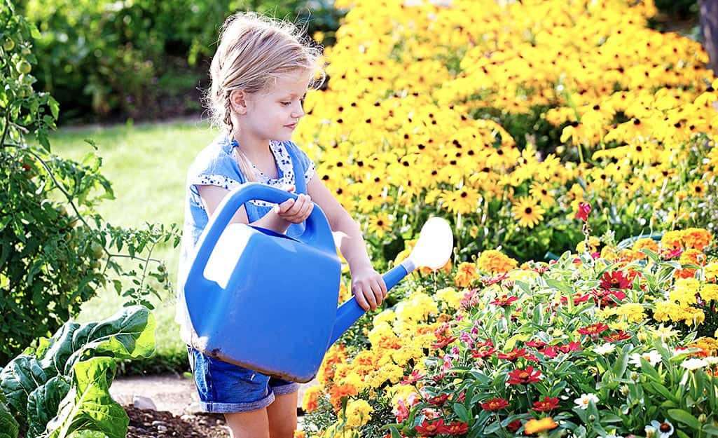 A little girl uses a watering can to water a flower garden.