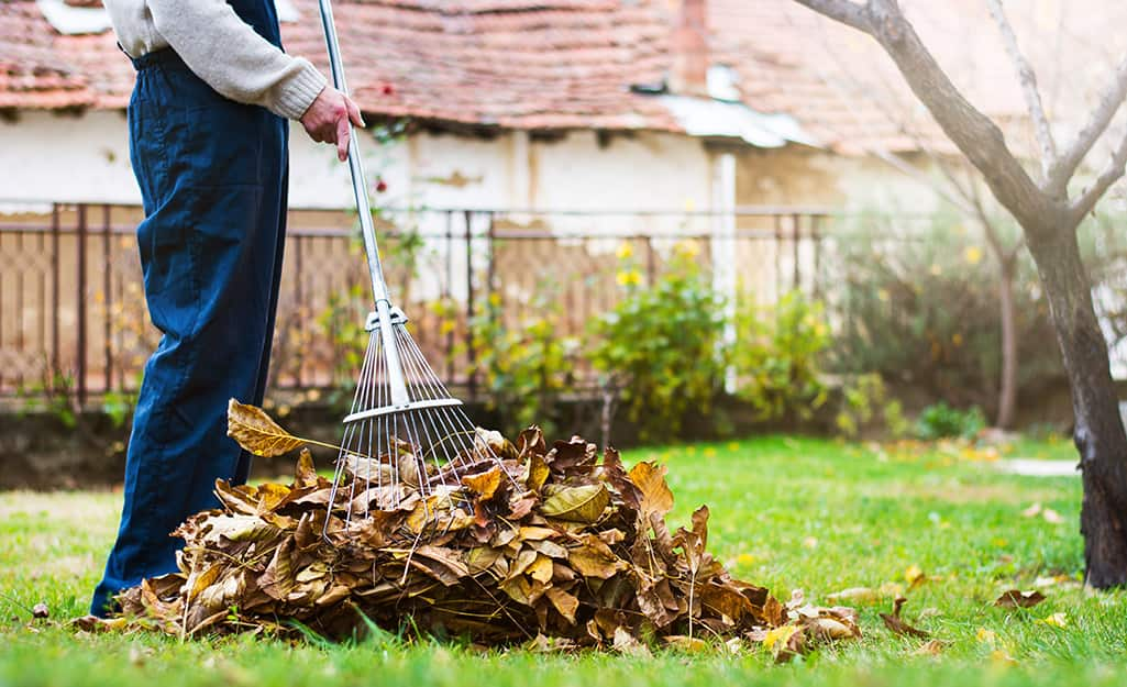 A man raking leaves in a backyard.