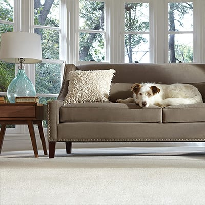 a dog on a sofa in a living room