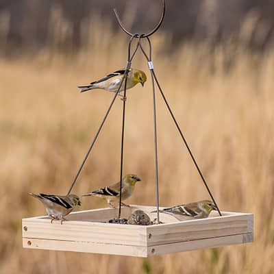 Birds sit in and eat from a wooden tray bird feeder.