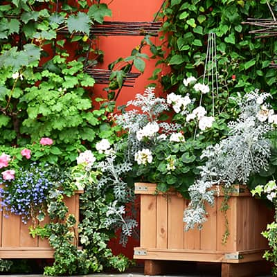 A collection of wood planter boxes full of plants and flowers.