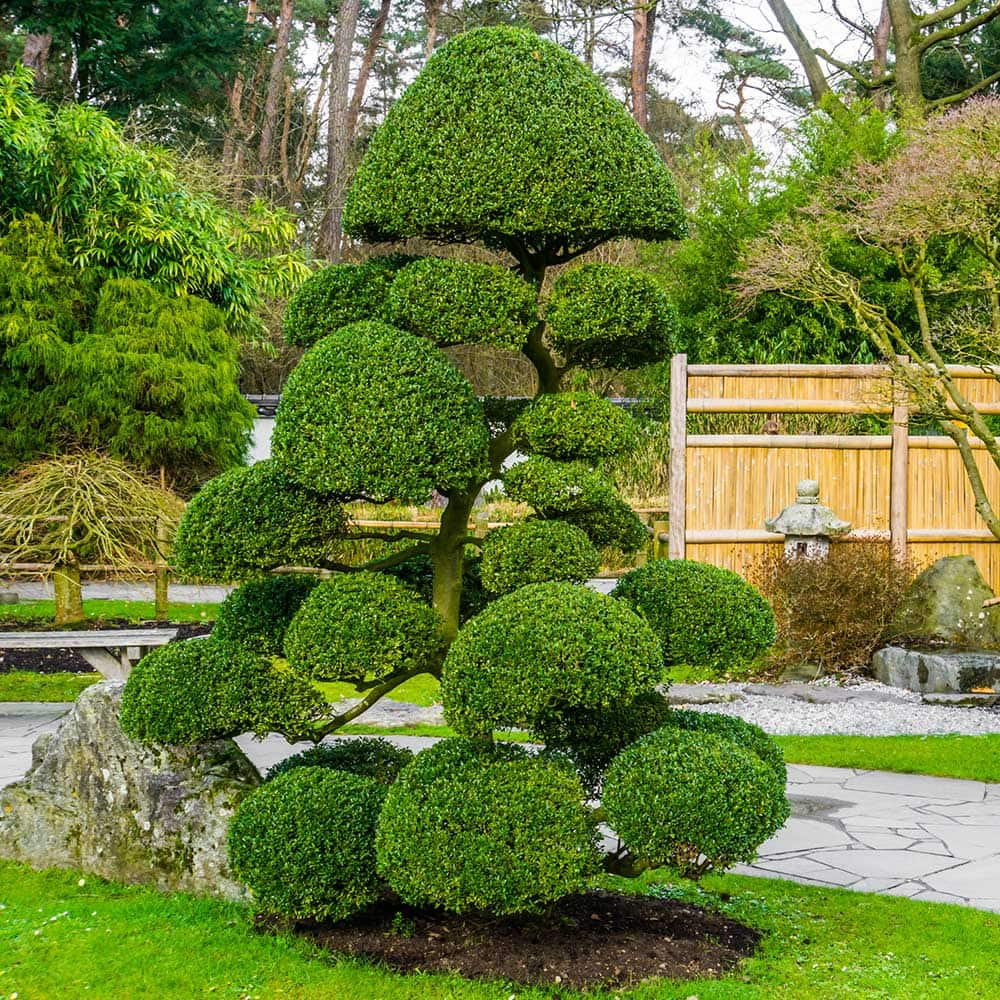 How to Make a Topiary - The Home Depot