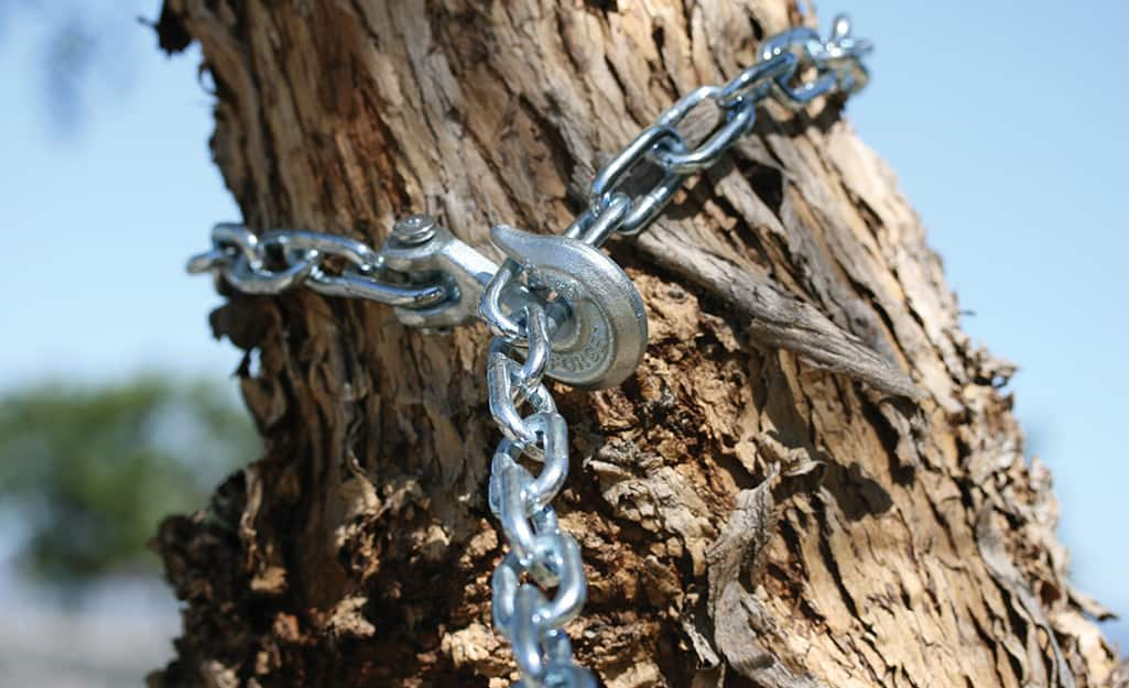 Chains fastened around a branch to make a tree swing.