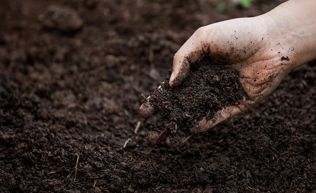 Someone grabs a handful of healthy topsoil.
