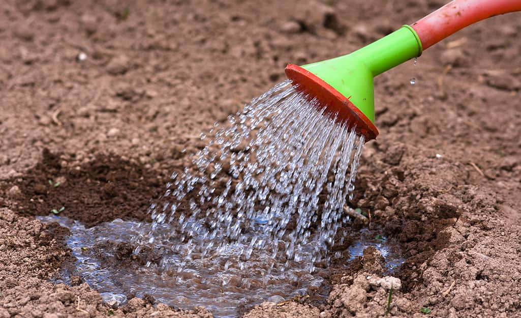 Person watering the soil