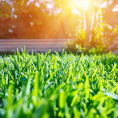 A green lawn on a sunny day.