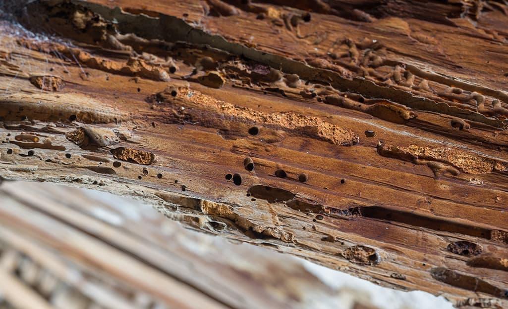 A rotting wood joist.