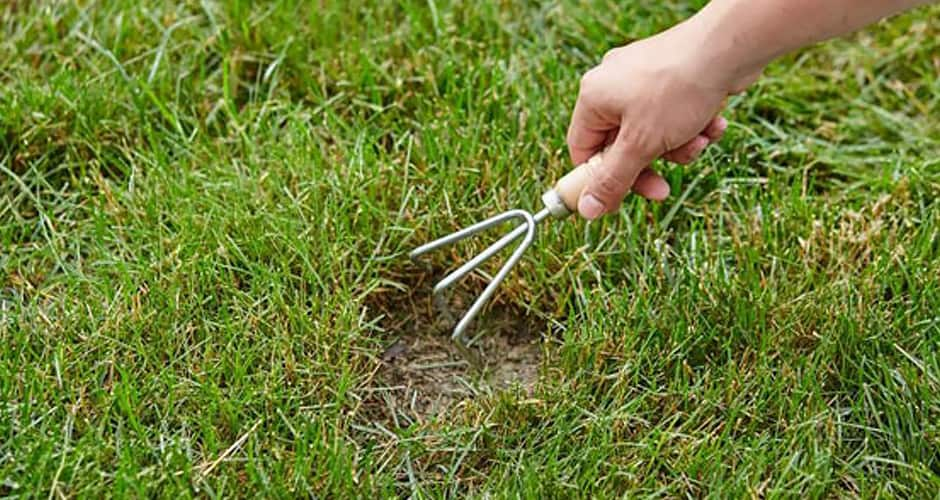 A gardener uses a hand cultivator to pull back dead grass
