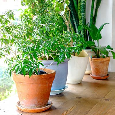 How to Revive a Dying Houseplant