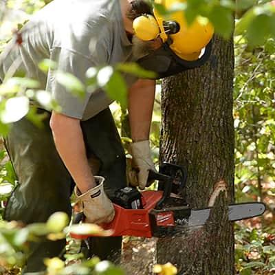 A chainsaw cutting through a tree.