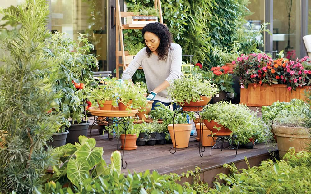 How To Start A Container Garden The, How To Start Container Gardening