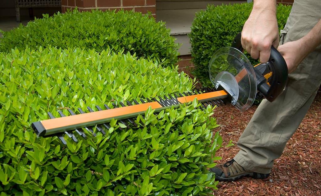 how to trim hedges step 3