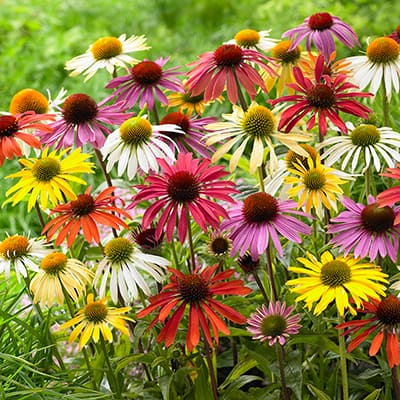 How to Troubleshoot and Care for Perennials in Your Garden