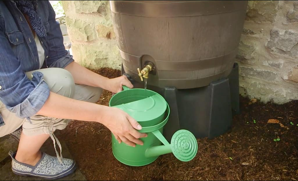 A person uses water from a rain barrel to fill a watering can.