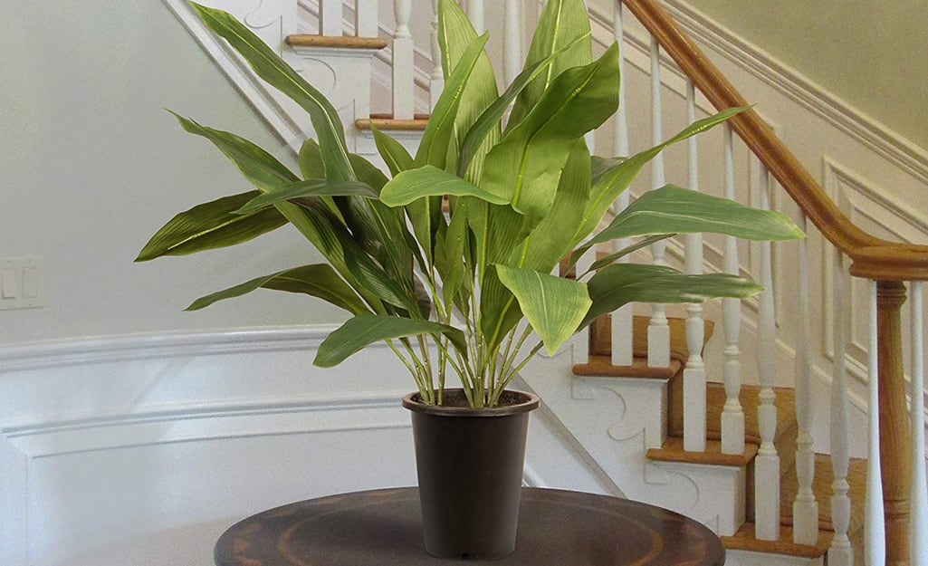 A large cast iron plant sits on an end table in a home.