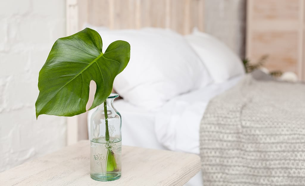 A single Monstera plant leaf displayed in a clear vase of water beside a bed.