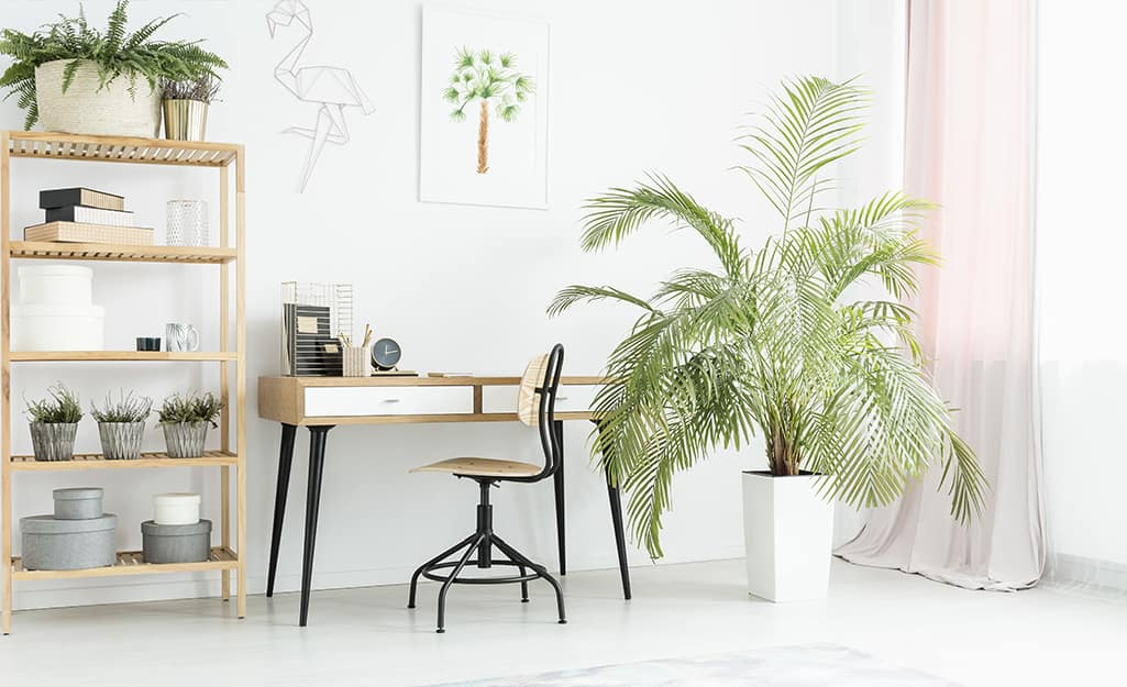An open office space with green plants on a bookshelf and in a large white planter
