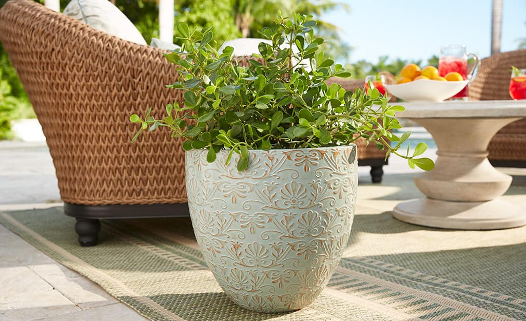 A white planter with a green plant sitting beside a chair in an outdoor living space.