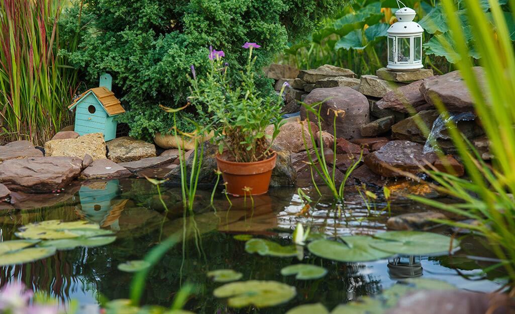 A pond with aquatic plants, a lantern and a bird feeder in a backyard setting.