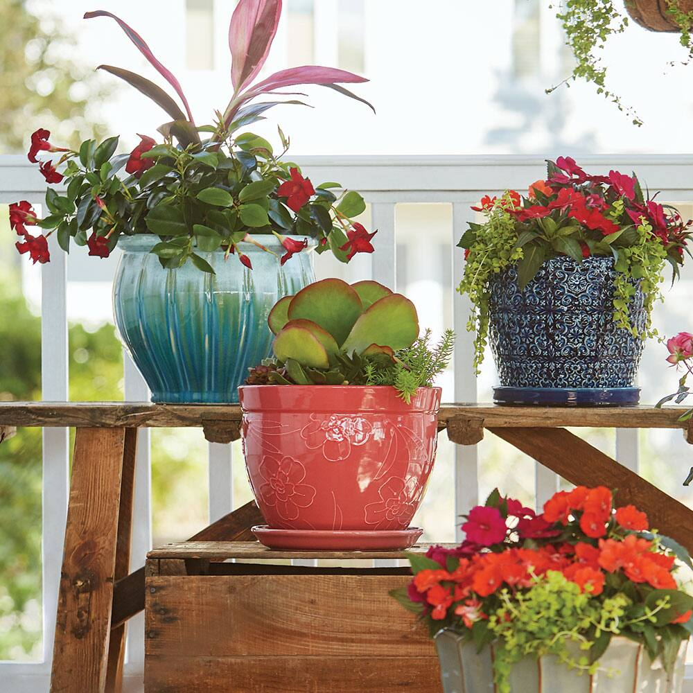 An assortment of ceramic planters with plants in them.