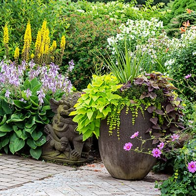 Container plants in a summer garden