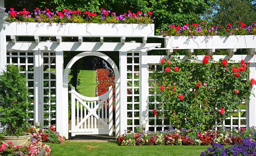 Red, pink and purple flowers bloom along a white trellis fence and gate