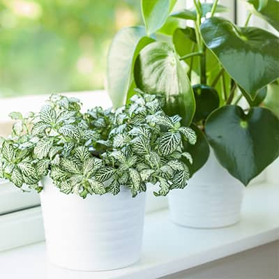 6 Top Houseplants for Small Spaces