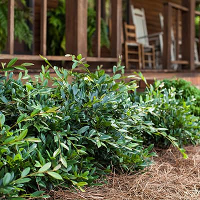 Green shrubs in front of porch