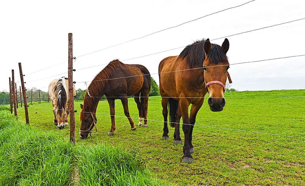 Large animal fencing penning in a group of horses.