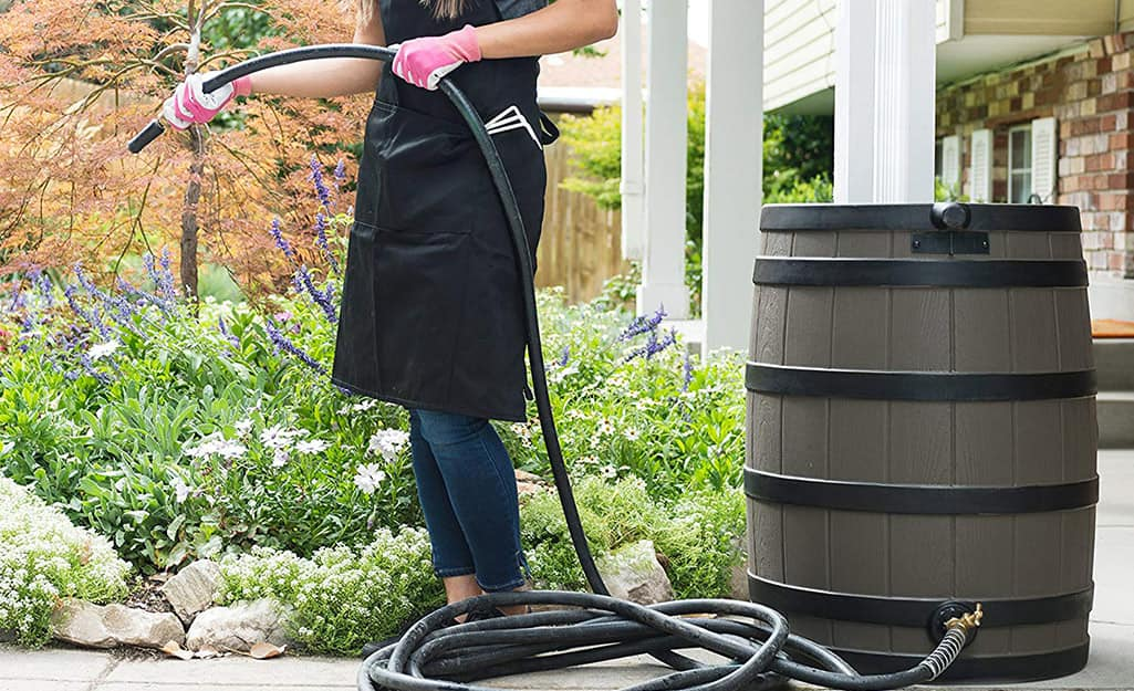 Someone watering flowers with a garden hose connected to a rain barrel.