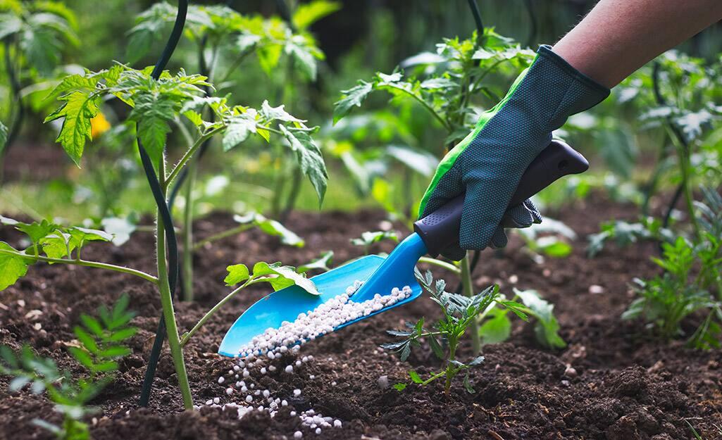 A person sprinkling soil amendments into a garden.