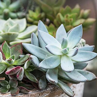 Use Cacti and Succulents in Bare Spots