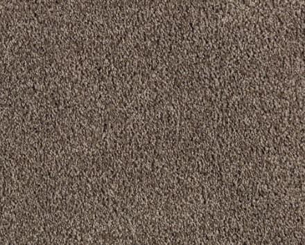 Shop Brown Carpet