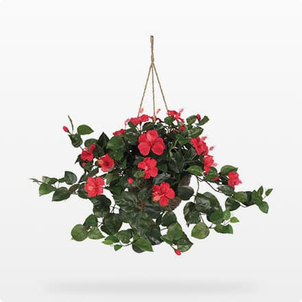 Plants Under $50