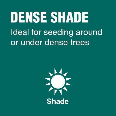 Dense Shade - Ideal for seeding around or under dense trees