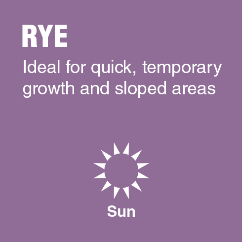 Rye - Ideal for quick, temporary growth and sloped areas