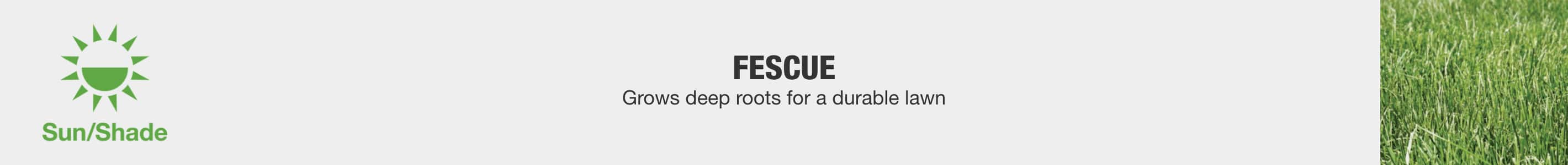 Fescue - Grows deep roots for a durable lawn