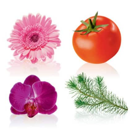 Flower, vegetable, houseplant and tree images