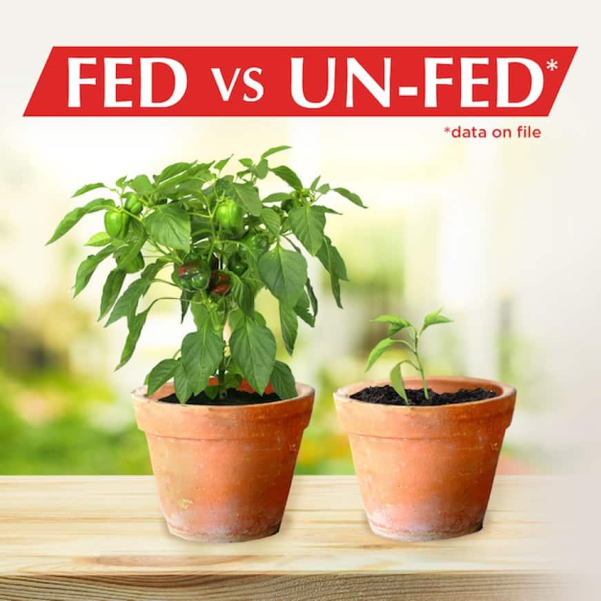 Alaska Fish Fertilizer great for indoor and outdoor plants