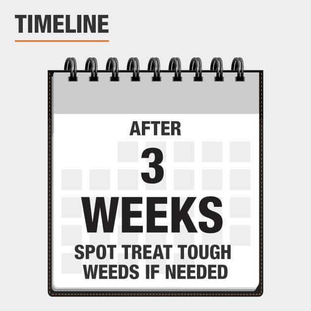 After 3 weeks, spot treat touh weeds if needed