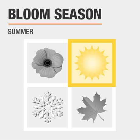 Blossoms Season   Summer