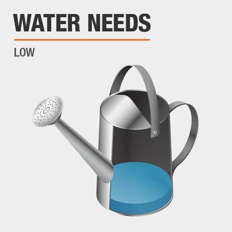 Low   Water Needs