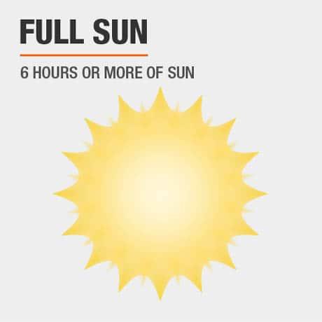 Full Sun   6 hours or more of sun