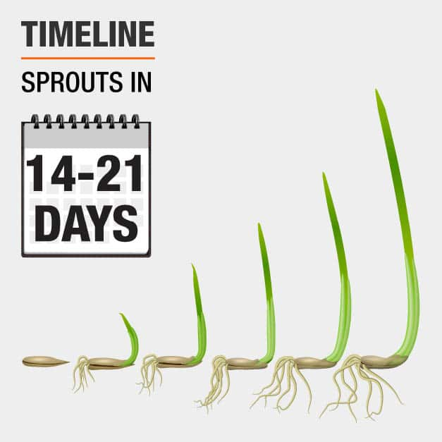Sprouts in 14-21 Days