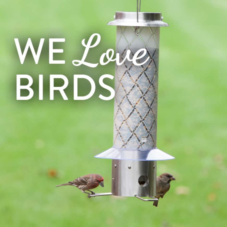 we love birds, squirrel resistant seed feeders