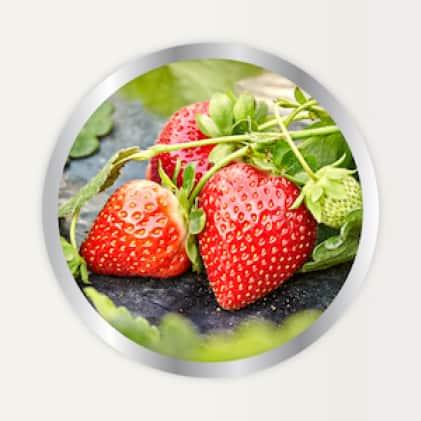 Alaska Morbloom Fertilizer use for berries