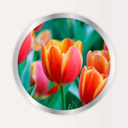 Alaska Morbloom Fertilizer use for bulbs and flowers