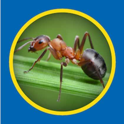 Sevin-5 Ready-To-Use 5% Dust kills ants