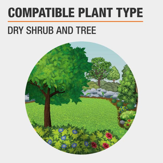 Dry Shrub and Tree