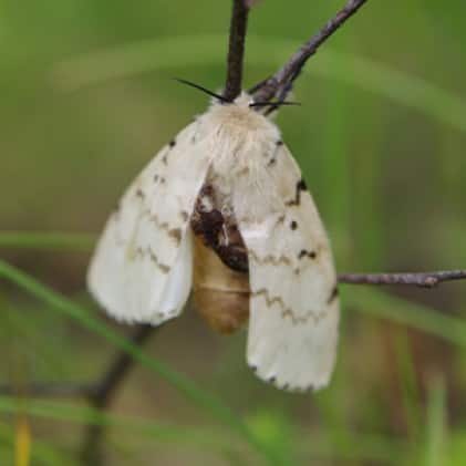 What We Catch - Moths